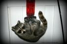 July - Raccoon thinks it's a hummingbird.