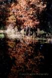 Reflectons 3