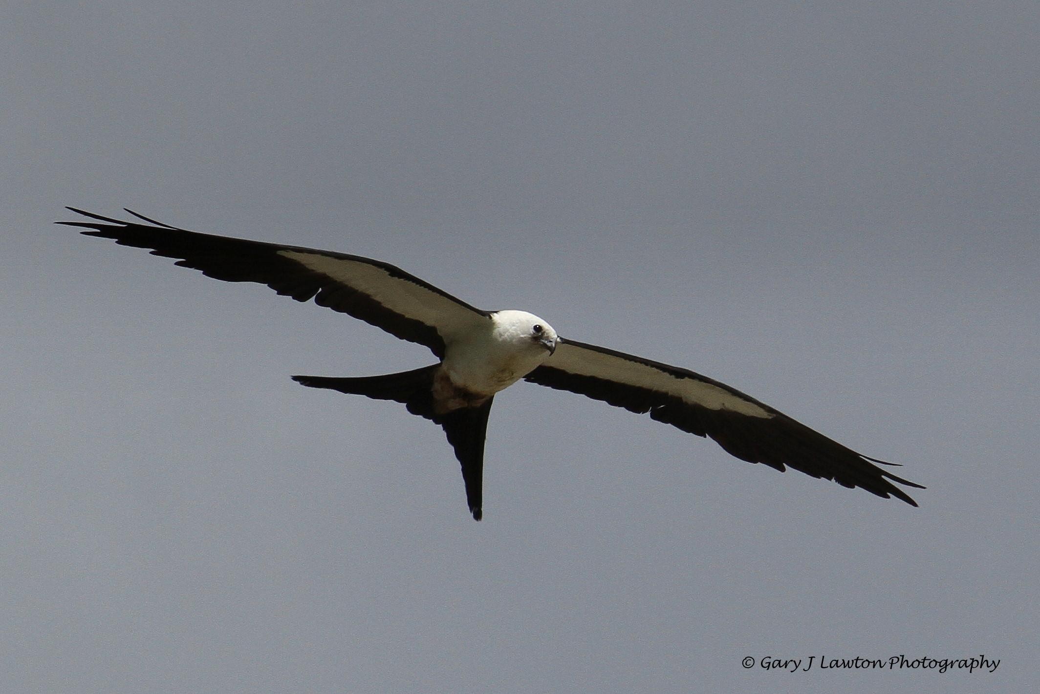 Long Island Birds Of Prey