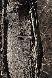 Bark Imprint