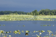 Distant Storm Lake