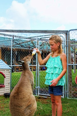 Kailey and Kangaroo p