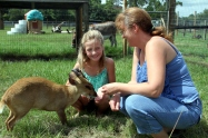 Kailey Mom and Deer