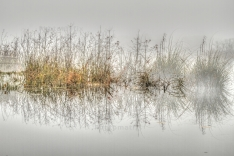 HDR Fog Grasses