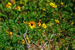 beach-sun-flower
