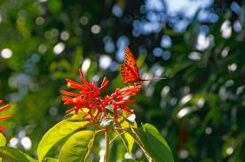 orange-butterfly-bokeh