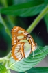 Tropical Butterfly 22