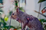 Squirrel with Warbbles Compressed