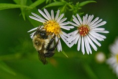 BUMBLE BEE SLEEPING