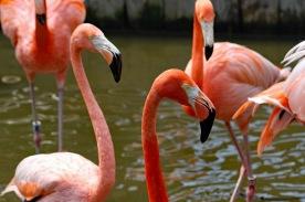 Flamingos 2 compressed