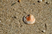 Shell Washed up Sound