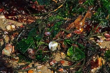 Shells in Wrack