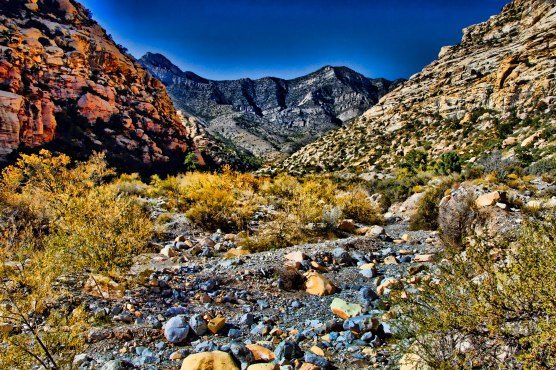 Red Rock 38 B Mojave Rabbitbrush