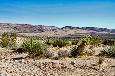 Red Rock 41 Desert Compressed