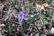 Violet Coastal Blue img637 2