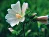 The Odiferous Plant